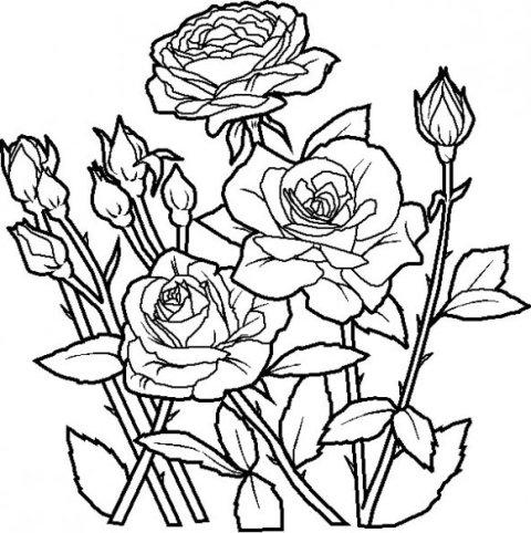 Desenhos De Flores Para Colorir Online24