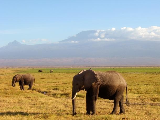 Kenya - Os 10 Melhores Destinos de Lua-de-mel